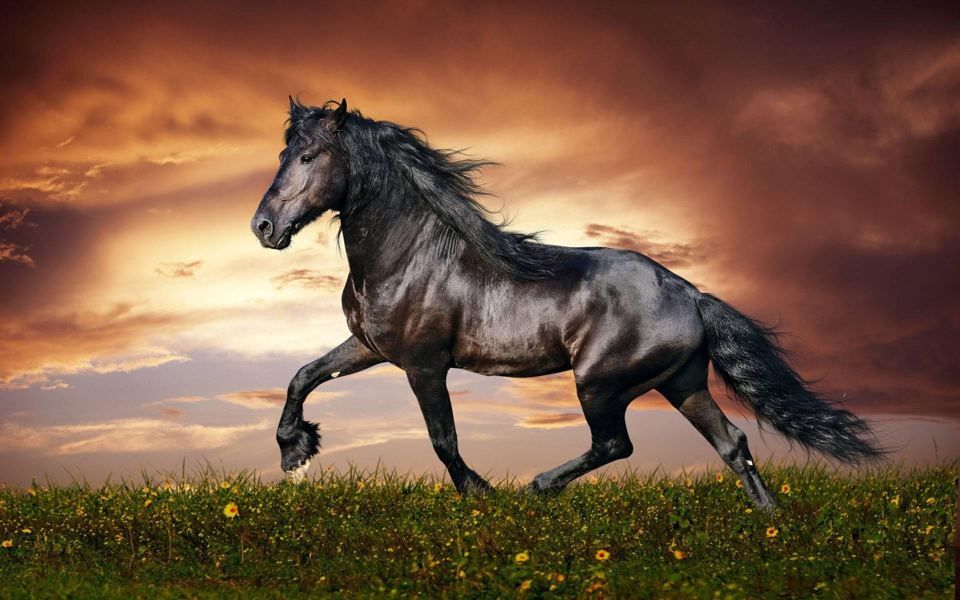 Гнедая масть лошади: описание и фото