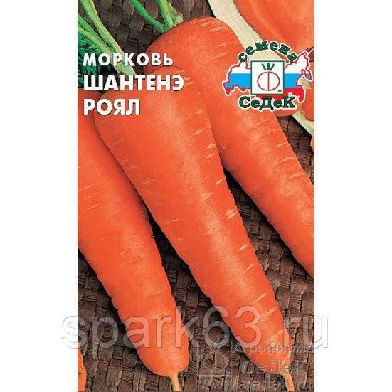 Морковь курода шантане отзывы фото