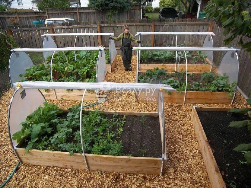 Особенности посадки лука на зелень весной: способы и технология