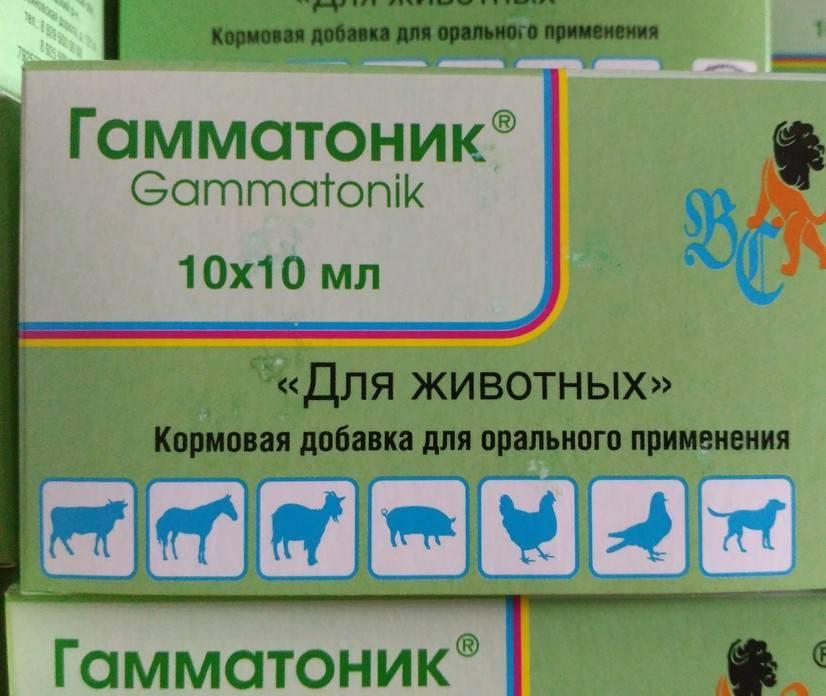 Гамматоник инструкция по применению в ветеринарии