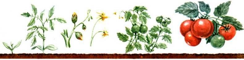 Вегетация растений — что это и как такой период протекает