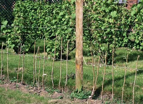 Подкормка малины весной минеральными удобрениями и народными средствами