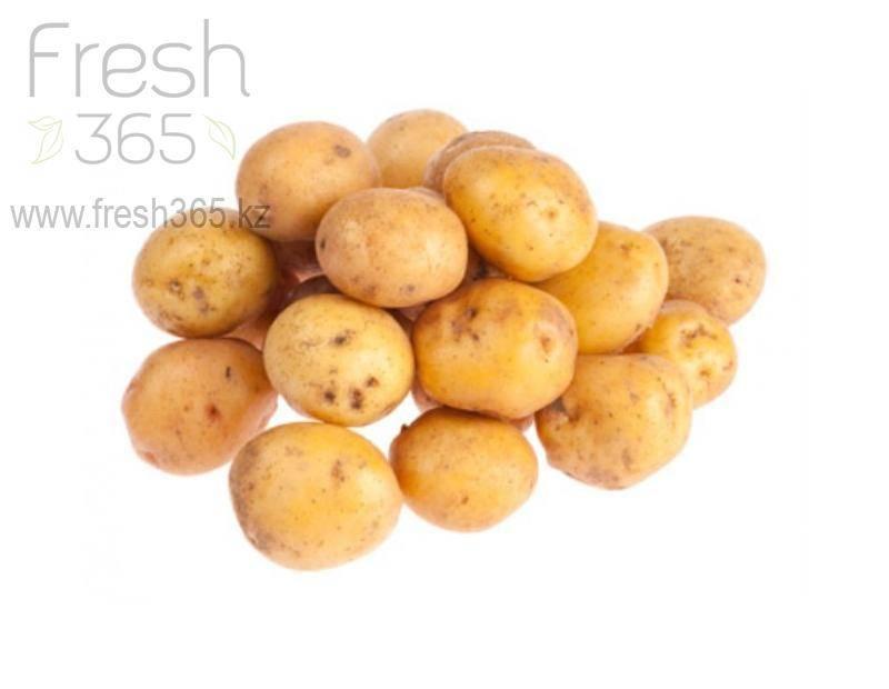 Агротехника выращивания картошки армада — описание сорта