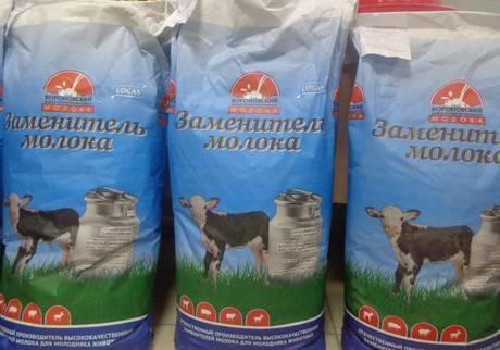 Заменитель цельного молока для телят (как разводить и поить): пропорции