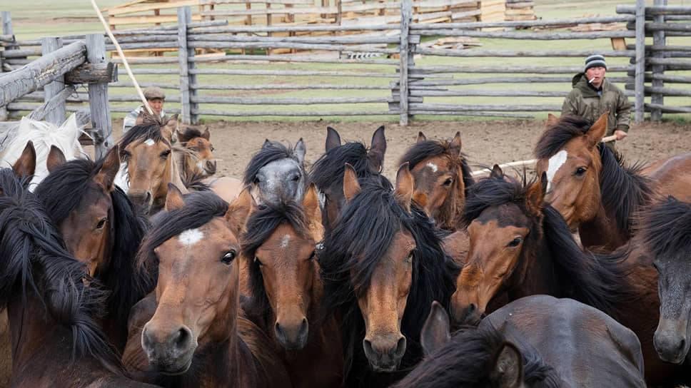 Стоимость содержания лошади в месяц: в какую сумму обходится