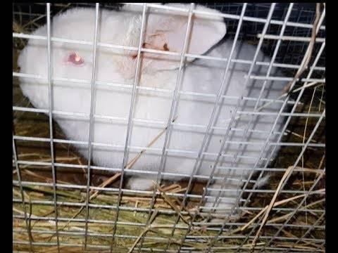 Почему у кроликов отказывают задние лапы