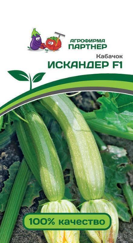 Кабачки искандер - описание сорта и советы по выращиванию