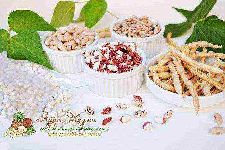 Пригласите семена на кофе: 5 советов как замачивать семена перед посадкой