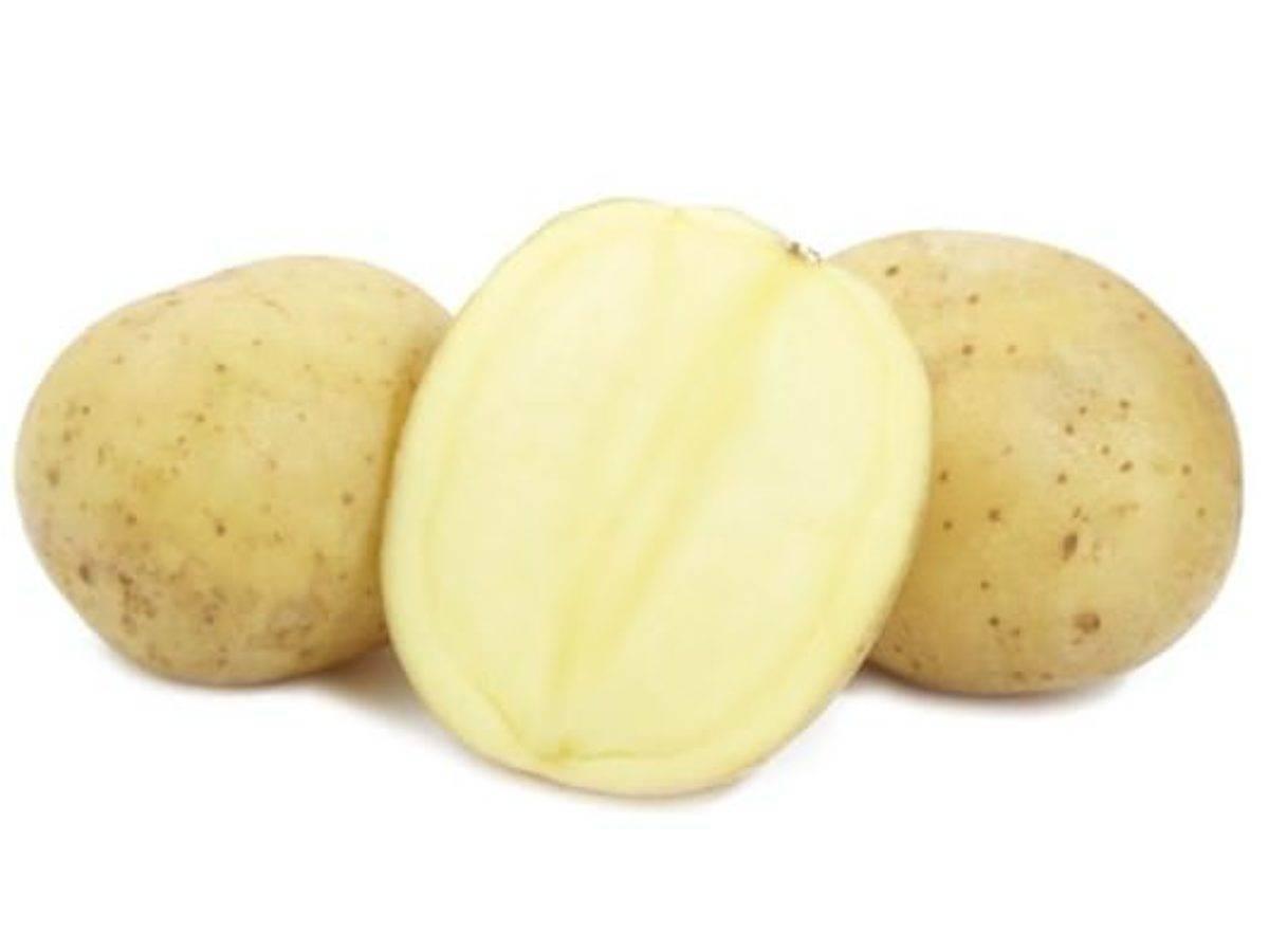Картофель каратоп: ранний урожай для частного участка. описание, особенности, реальные отзывы