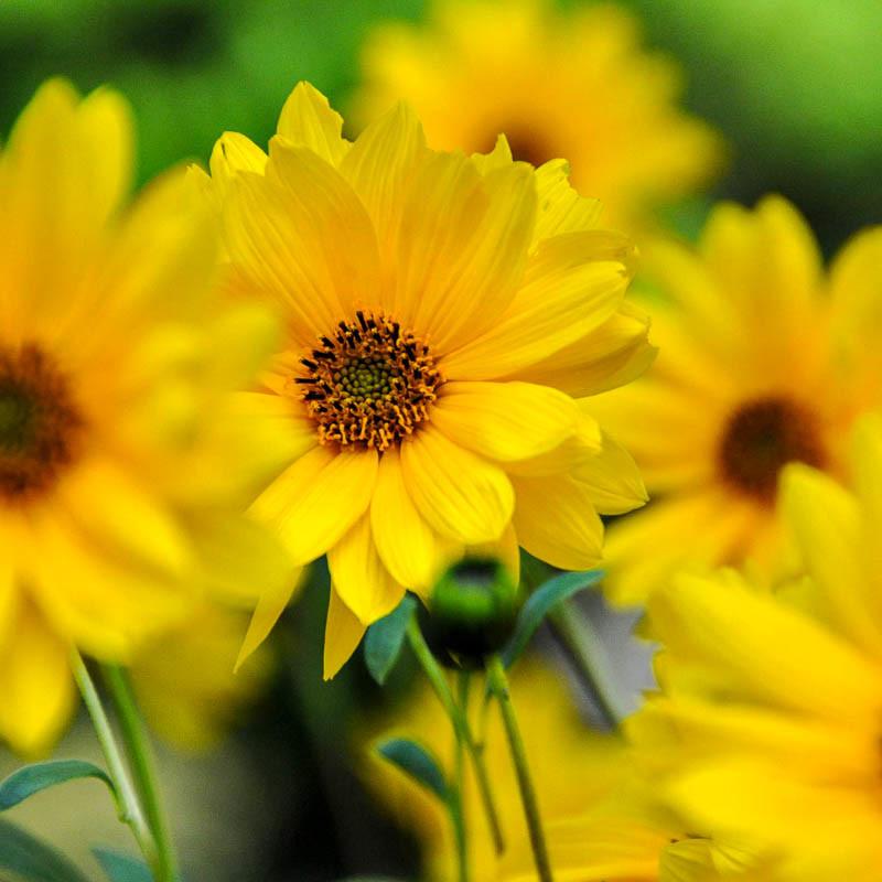 Каталог бордюрных цветов и растений многолетников с названиями и фото
