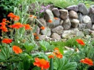 Гравилат: посадка и уход, выращивание, размножение, фото, описание - читайте на орхис
