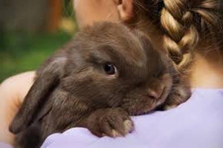 Можно ли давать кроликам арбузные корки, дыню