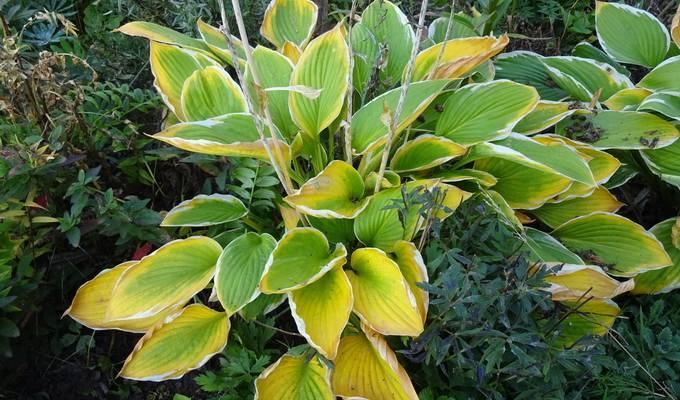 Что делать, если у юкки желтеют листья?