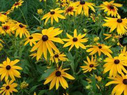 6 неприхотливых многолетников, которые украшают мои цветники в сентябре