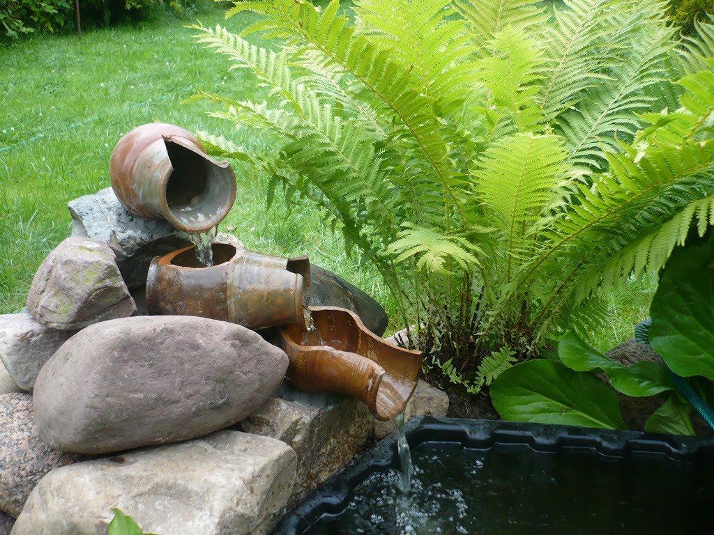Как вырастить папоротник на участке в современном саду: разновидности, уход, размножение
