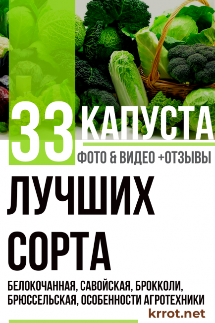 Виды и сорта капусты: с фото и описанием