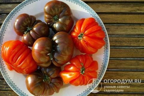 """Томат """"красный купол"""": описание сорта, характеристики помидоров, рекомендации по уходу"""