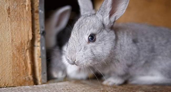 Как отучить кроликов грызть свои клетки?