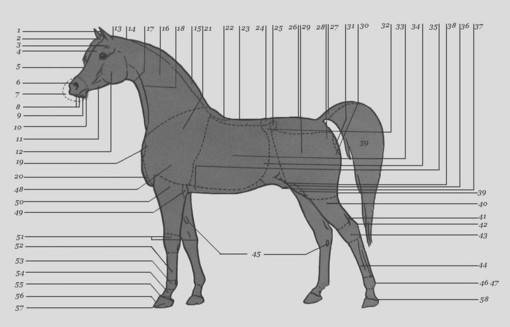 Как понять о чем говорят лошади - wikihow