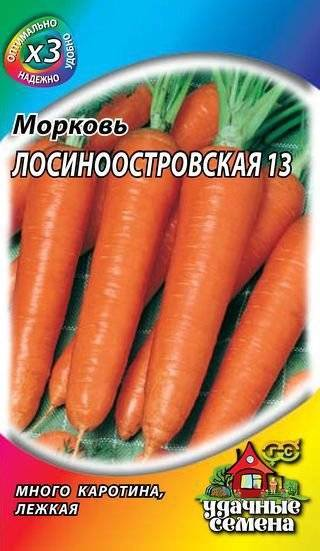 Сорт моркови лосиноостровская — описание и правила выращивания