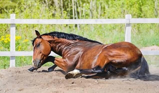 Случная болезнь лошадей: патогенез, клинические признаки, талерные бляшки, диагноз, лечение, мероприятия по предупреждению заболевания.    ветеринарная служба владимирской области