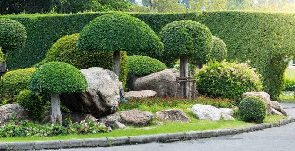 Что посадить в тени на даче: каталог тенелюбивых растений