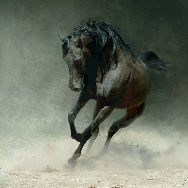 Какие бывают аллюры у лошадей