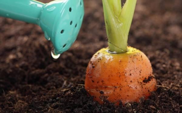 Как сажать морковь, чтобы не прореживать: 7 способов посадки