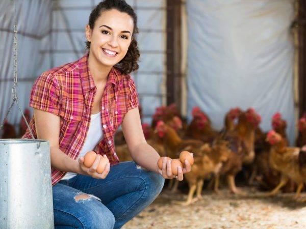 Чем и как правильно кормить кур в домашних условиях