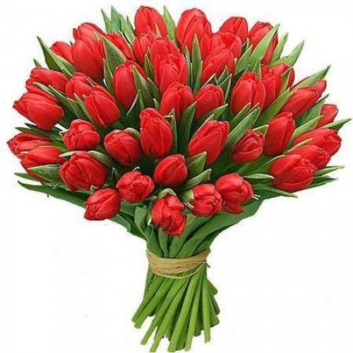 Тюльпаны: посадка и уход в открытый грунт, фото, выращивание из луковиц