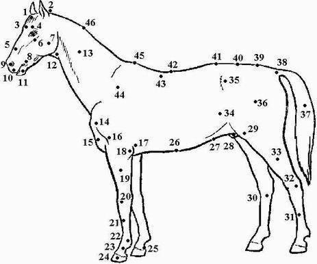 Пословицы и поговорки о лошадях