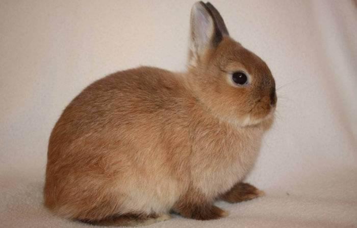 Нужно ли стричь когти кролика?