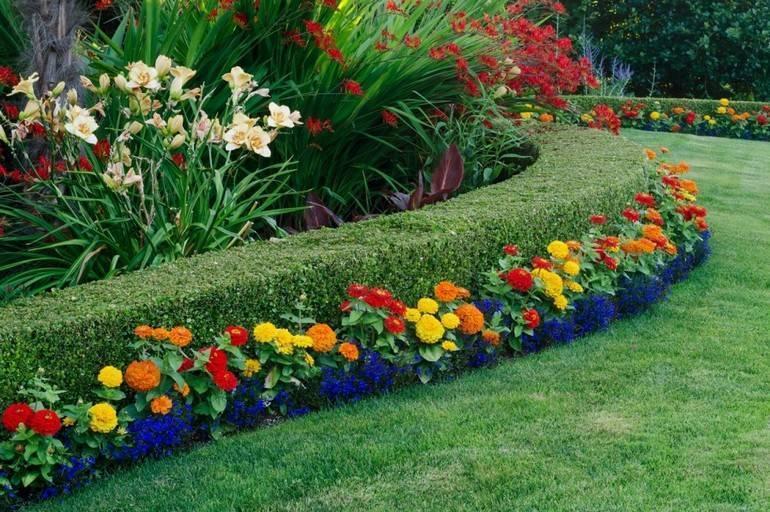 Посадка лилий (28 фото): на какую глубину сажать луковицы? как правильно посадить их осенью и в июне в открытый грунт? можно ли высаживать их рядом с розами и другими цветами?
