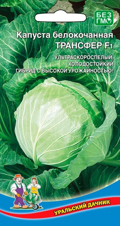 Особенности выращивания капусты пандион