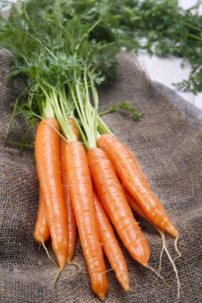 Описание, характеристика и особенности выращивания сорта моркови чемпион