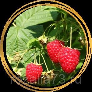 Особенности малины сорта херитейдж