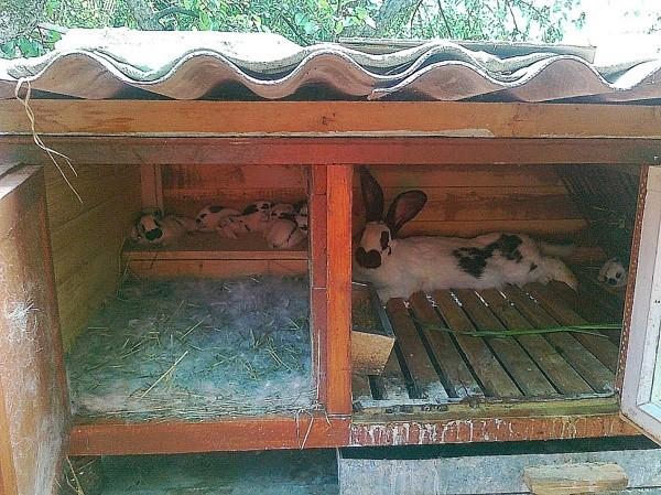Устройство маточника для кроликов и как сделать своими руками