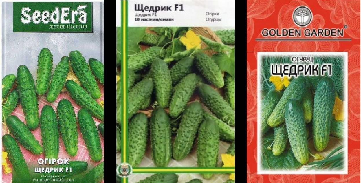 Описание сорта огурцов щедрик, их выращивание