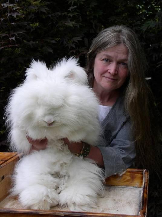 Разведение кроликов, секреты эффективного разведения кроликов