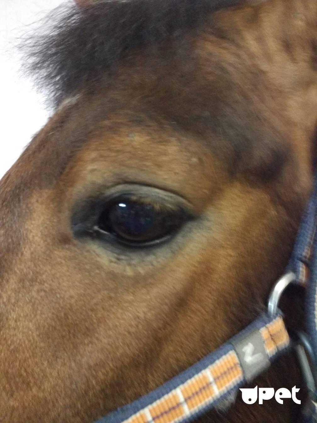 Лошади — интересные факты