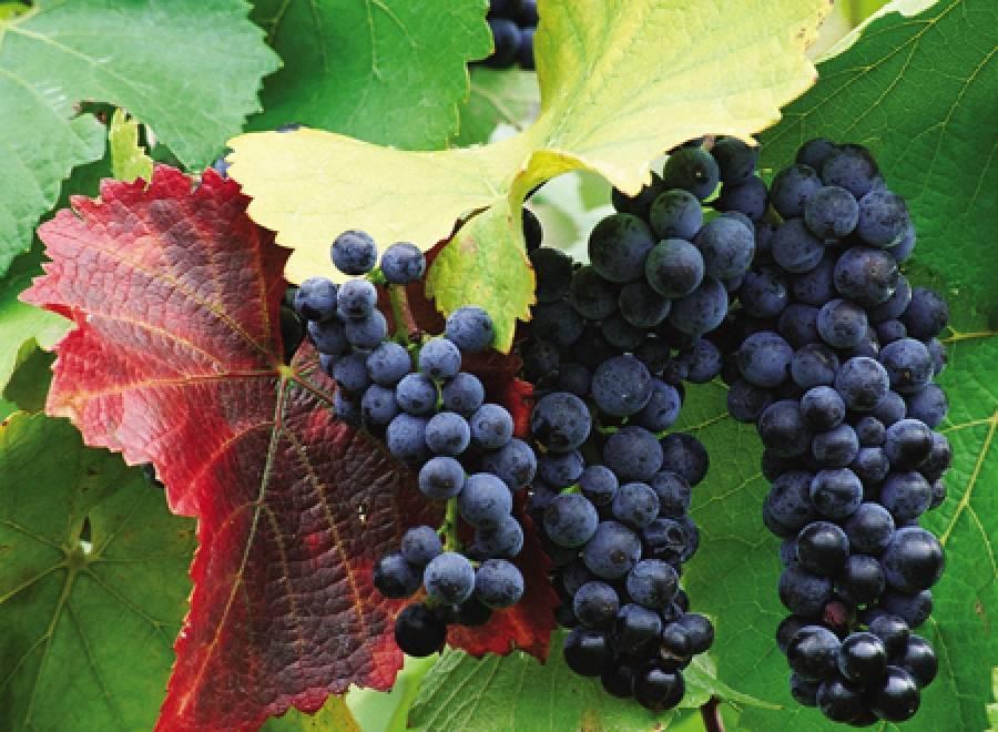 Сухие красные вина - какое самое лучшее в мире, как выбрать вкусное, качественное и натуральное, марки и названия