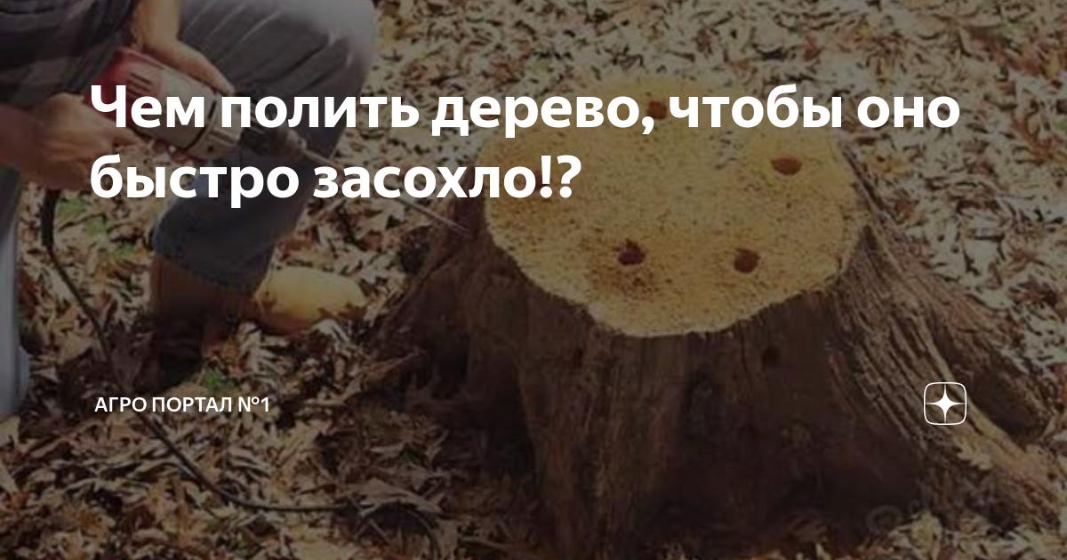 Чем полить дерево, чтобы оно быстро засохло: общий взгляд