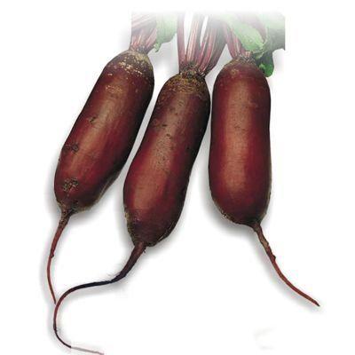 Сорта свеклы самые лучшие без светлых колец - подробный обзор + информация по выращиванию!