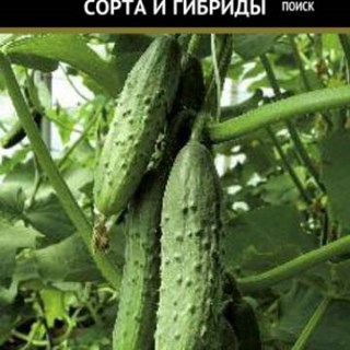 Отечественный гибрид огурцов «атлет f1»: фото, видео, описание, посадка, характеристика, урожайность, отзывы