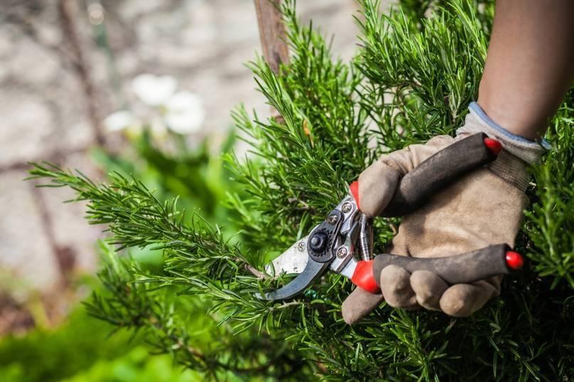 Правильная обрезка декоративных кустарников – все, что вы хотели знать