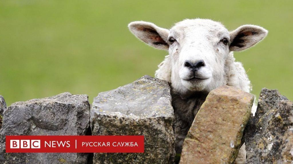 Как называется помещение, где живут овцы?