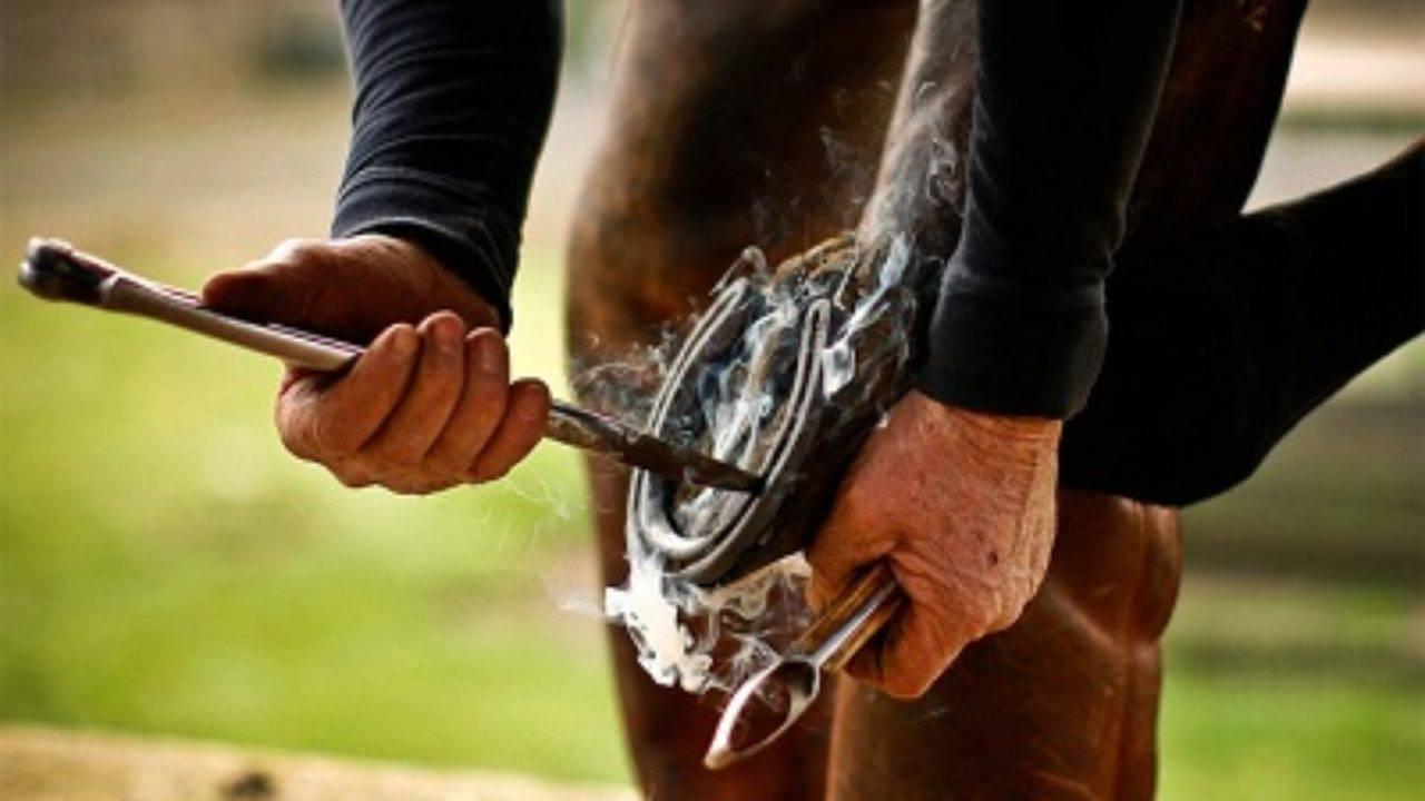 Подкованная лошать: зачем подковывать лошадь, виды подков