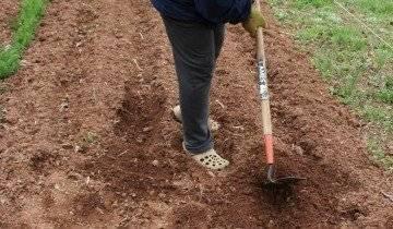 Обработка почвы медным купоросом весной под картофель