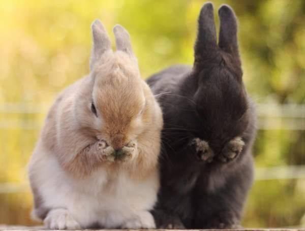 Почему зайцы стучат лапами