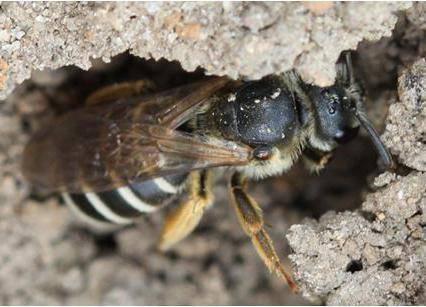 Как избавиться от пчел в частном доме